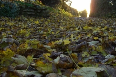 61 Autumn leaves down Catterals Lane